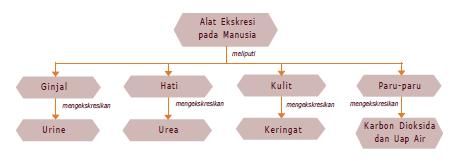 Peta Konsep Sistem Ekskresi