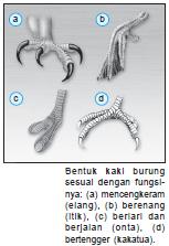 Variasi Bentuk Kaki Burung