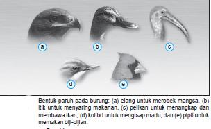 Variasi Bentuk Paruh Burung